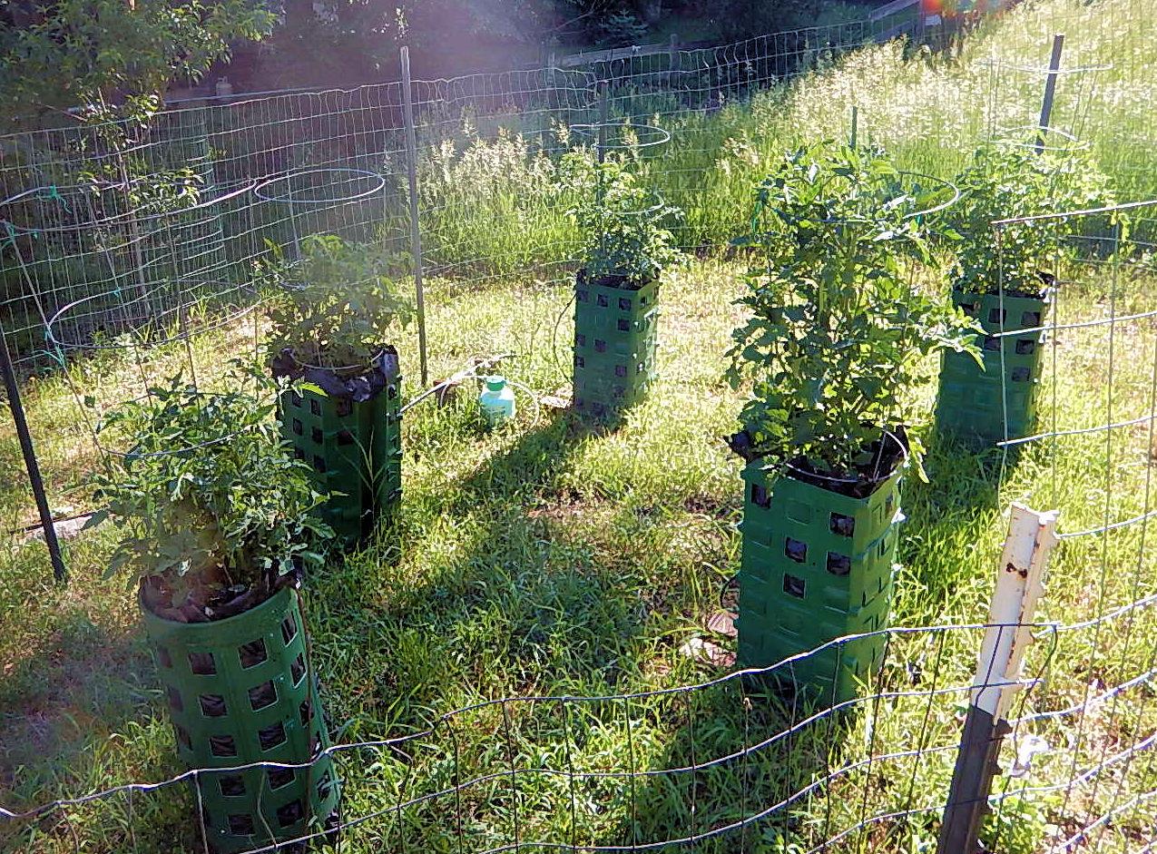 Old broadmoor neighborhood association vegetable gardening in broadmoor soils - Soil for container vegetable gardening ...
