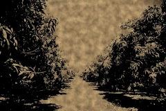 Cerita Hantu Tegal dan Sawah #3