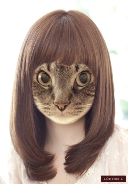 cat haircut styles noa amp ash we are kittens forever new hairstyles 2409