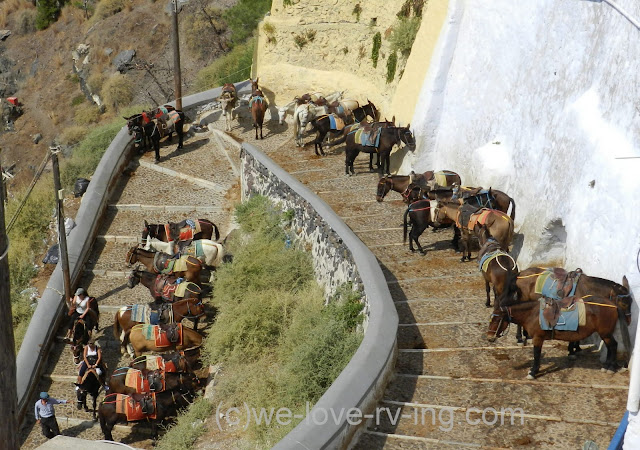 The donkeys are waiting till their turn to carry tourists up the steps