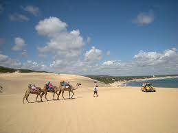 Homem com três camelos nas areias das Dunas de Genipabu-Rio Grande do Norte