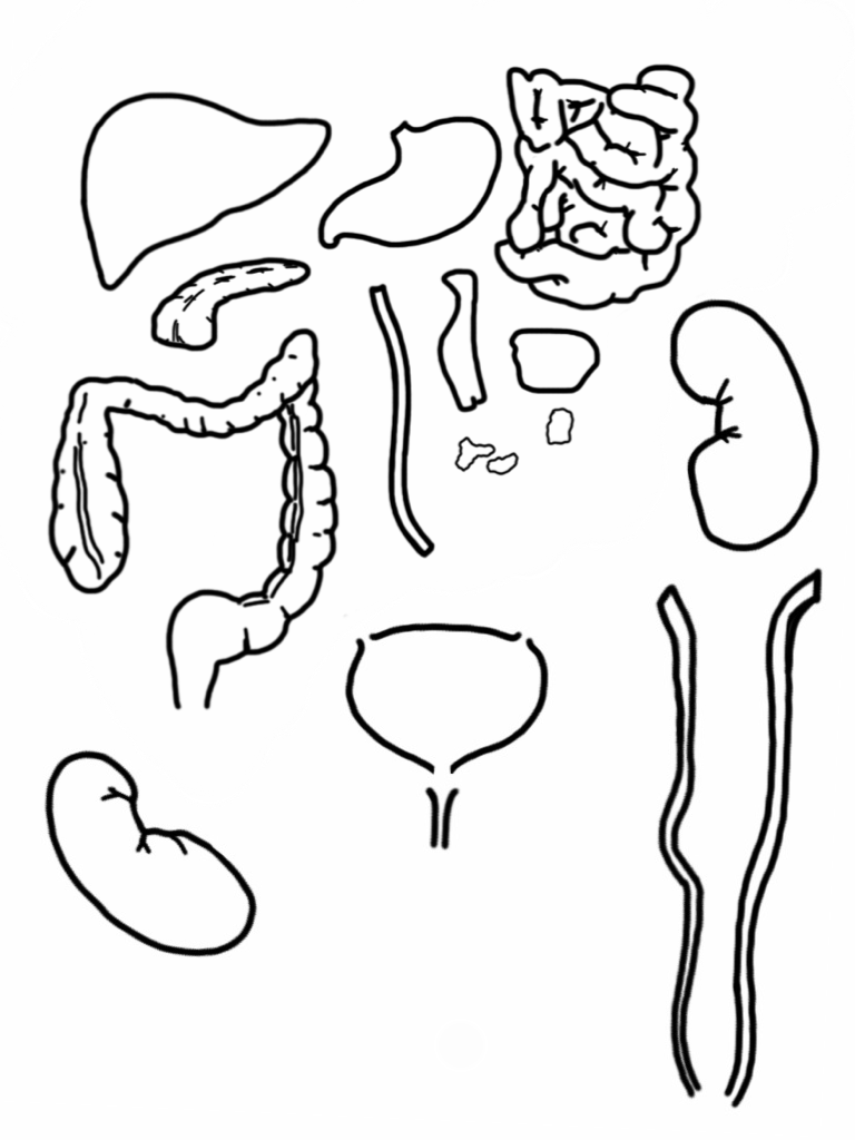 Dibujo Del Aparato Digestivo Para Colorear E Imprimir Imagui