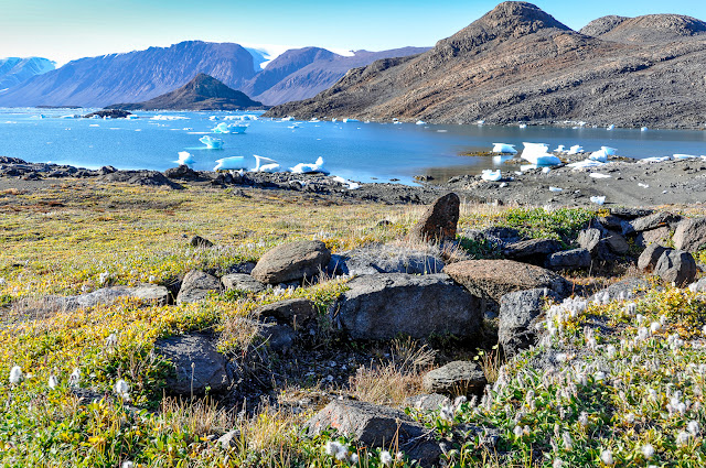 Aquecimento no Ártico está trazendo diversidade de plantas altas para região e causando impactos alarmantes
