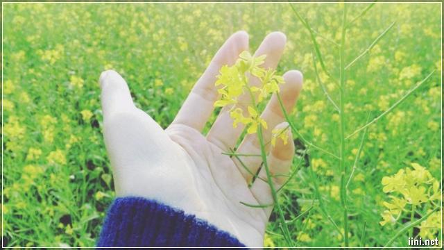 ảnh đưa tay lên cánh hoa cải