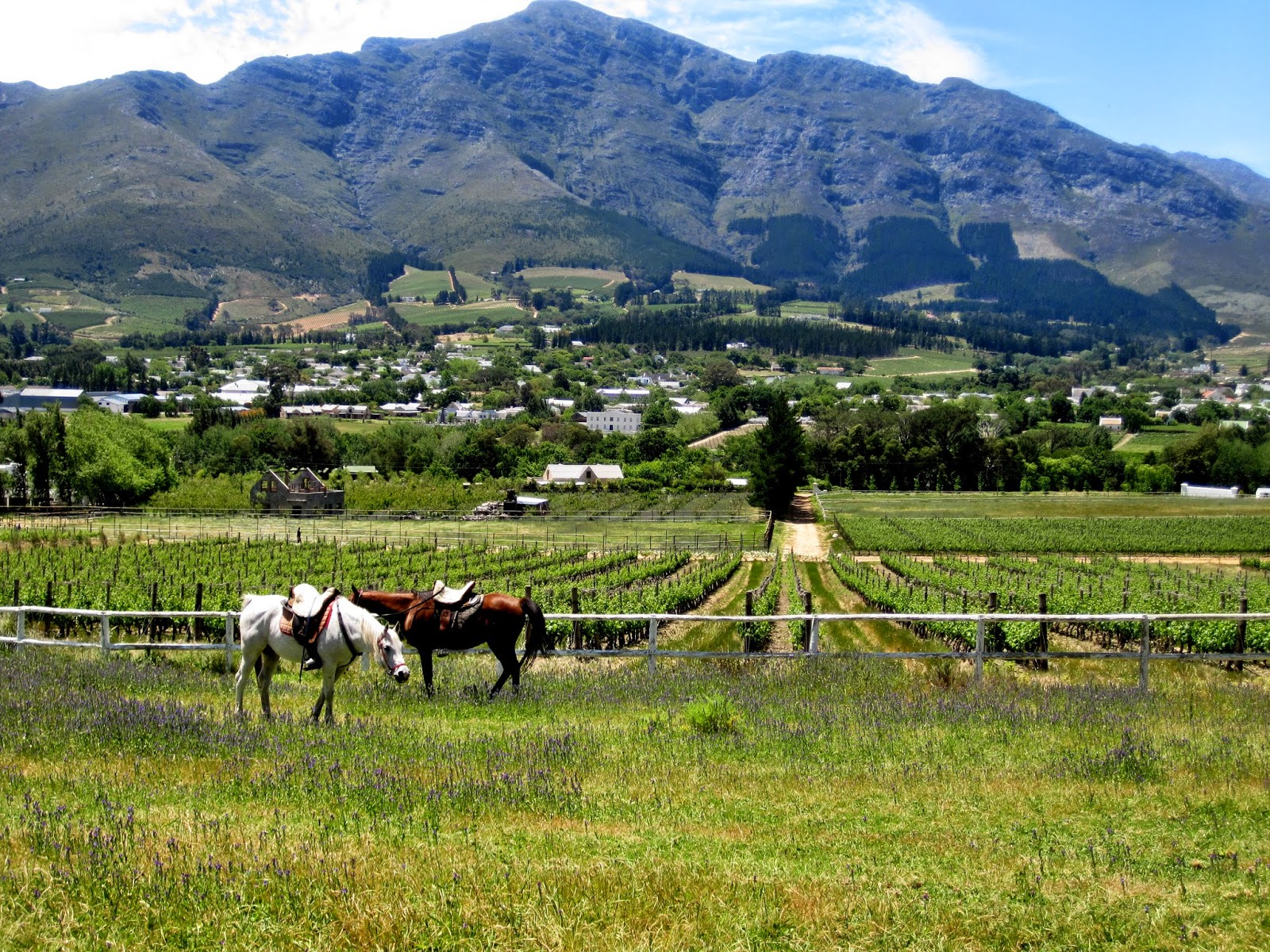 View of Franschhoek from Mont Rochelle winery