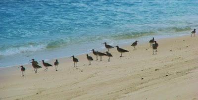 Burung-burung di pantai Boa