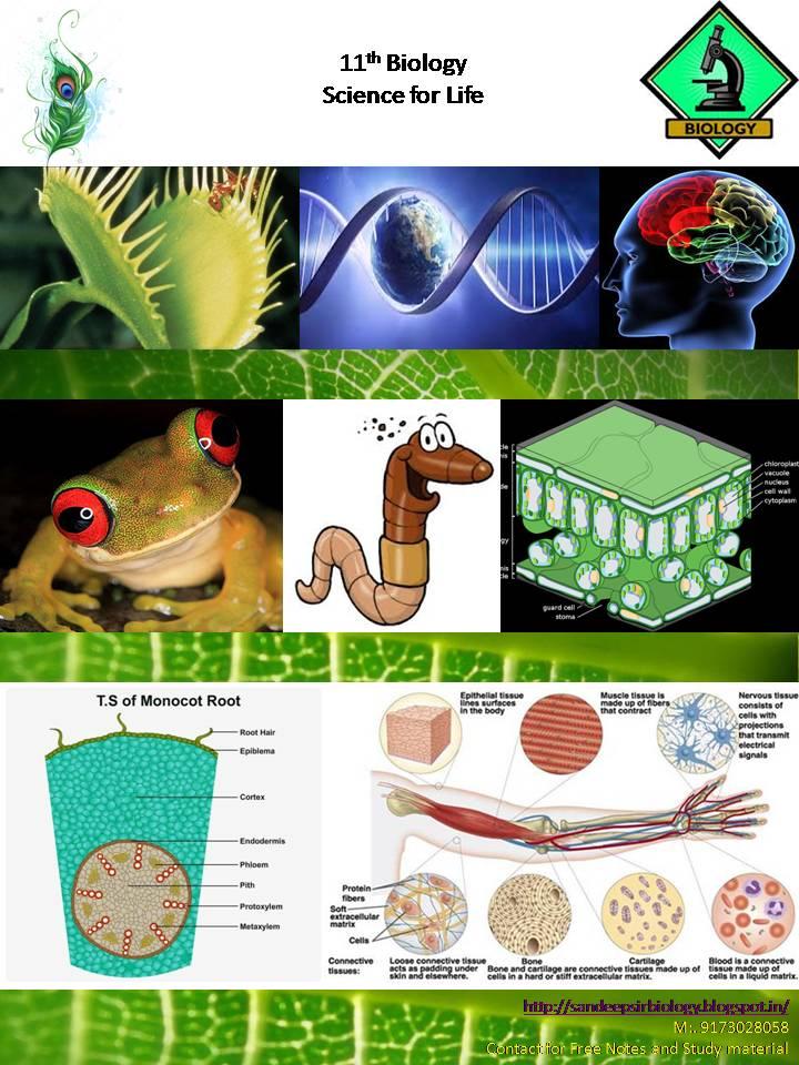 Sandeep Sir Biology Anatomy Of Flowering Plant 11 Th Notes In Hindi