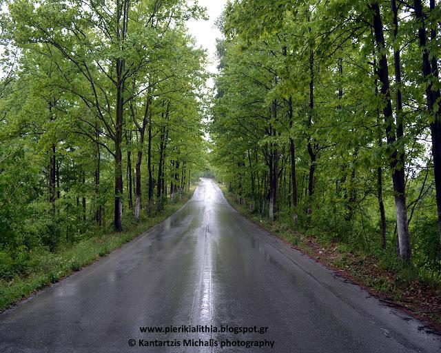 """Όμορφες διαδρομές στην Κατερίνη με την """"ΑΛΗΘΕΙΑ"""". Γνωρίζετε που βρίσκεται αυτή η πανέμορφη διαδρομή;"""
