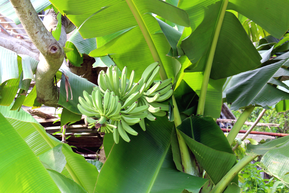 Banana trees on Lamma Island   Hong Kong travel blog   lifestyle blogger