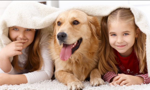 The Proven Dos and Donts To Deal With Pet Allergy in 2018