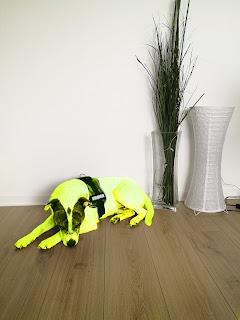 Gelb, gelb, gelb sind alle meine Kleider...oder so ähnlich