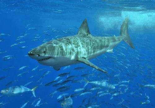 رؤية جديدة لكيفية تجديد أسماك القرش أسنانها تمهد الطريق لتطوير علاجات مساعدة لمن فقدوا أسنانهم
