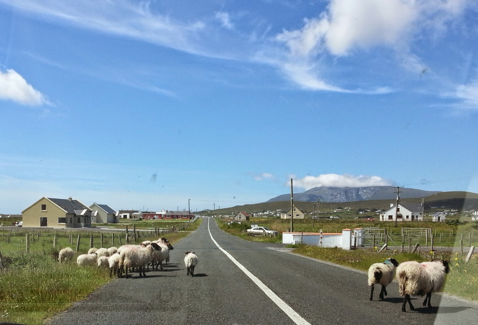 sheep on road, sunny day, blue sky, wispy clouds