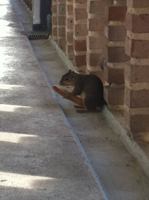 squirrel-funny-pic