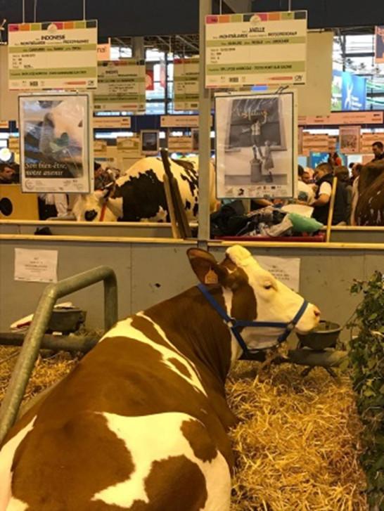 Cfppa des pays d 39 aude salon de l 39 agriculture 2017 un - Salon de l agriculture voyage organise ...