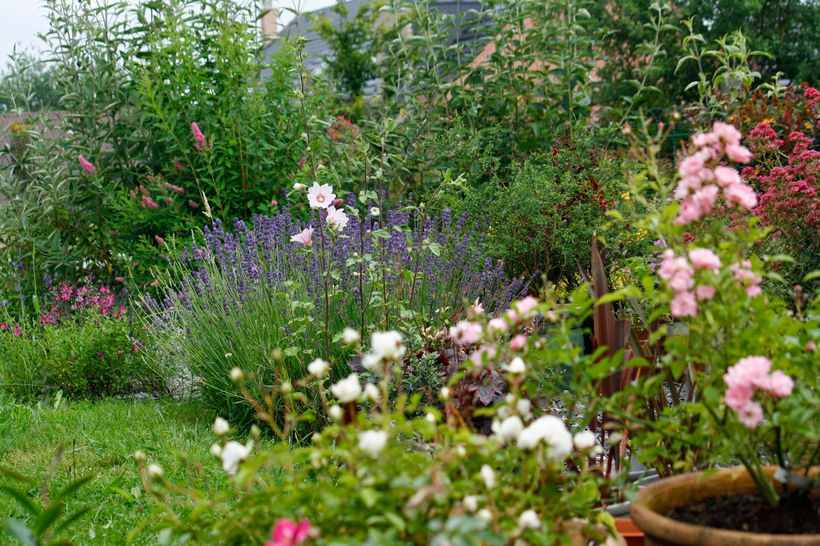 le jardin en désordre : Les fleurs de mai