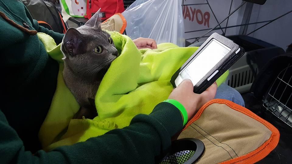 Blog Sklepu Kocimiętka Wywiad Hodowla Kotów Rasy Korat