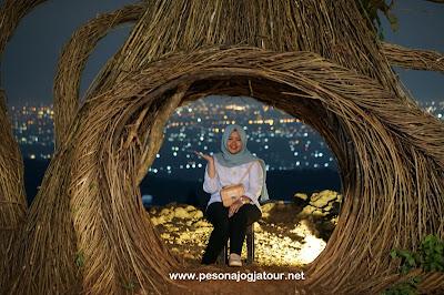 Spot foto Pinus Pengger