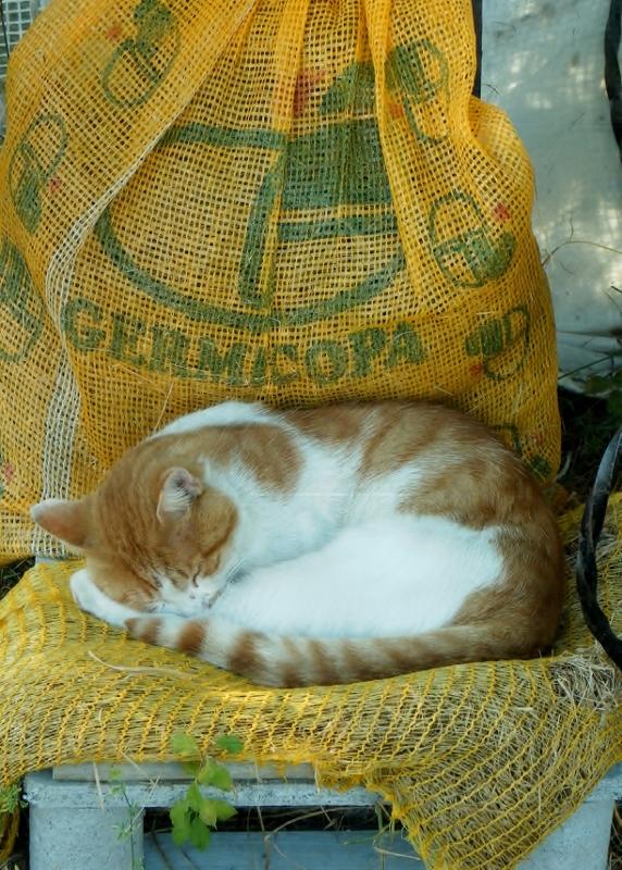 Ma vie de chat par Ama - Alpes de Haute Provence