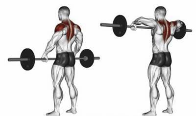 barbell row for trapezius