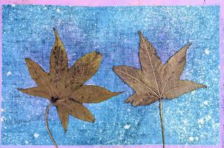 Wet cyanotype_Sue Reno_Image 270