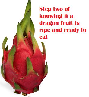 Step two of knowing if a dragon fruit is ripe and ready to eat