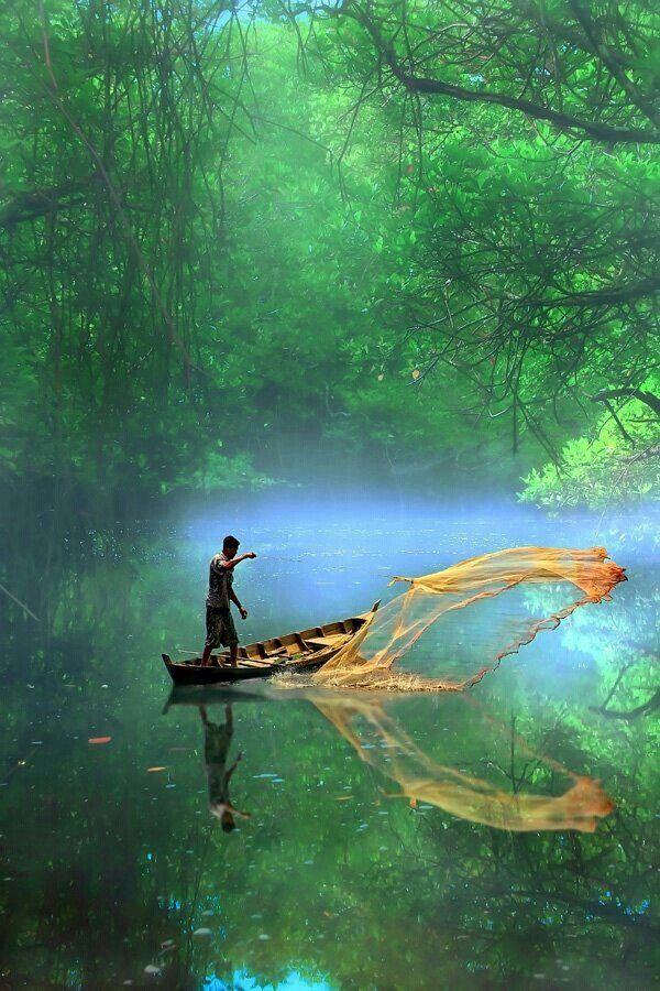Maintenance Margin - Ratargul swamp forest of Bangladesh