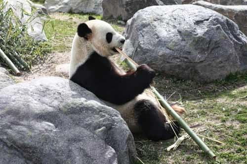 A typical Panda day.