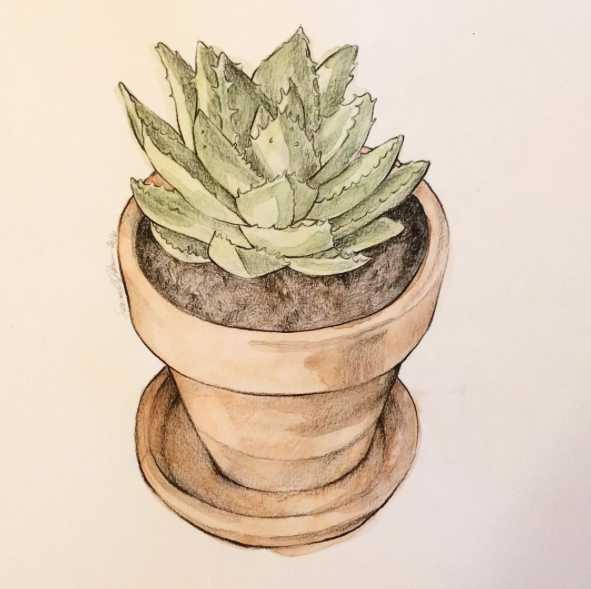 potted-succulent, watercolor-succulent
