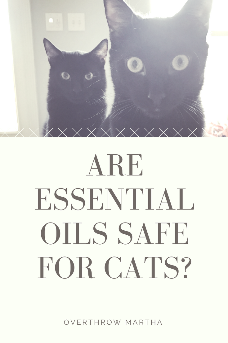 are essential oils with cats safe overthrow martha. Black Bedroom Furniture Sets. Home Design Ideas