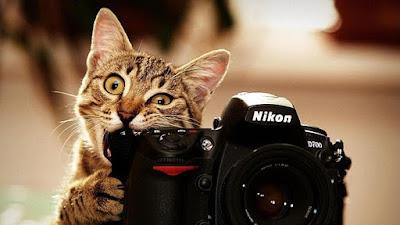 Resultado de imagen de fotografia artisticas animales