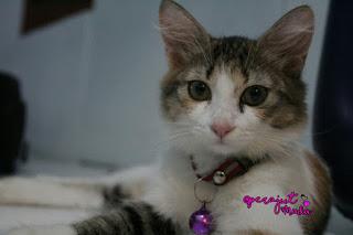 Bocil, anak kucing, anak kucing lucu, kucing mix dome, kucing domestik