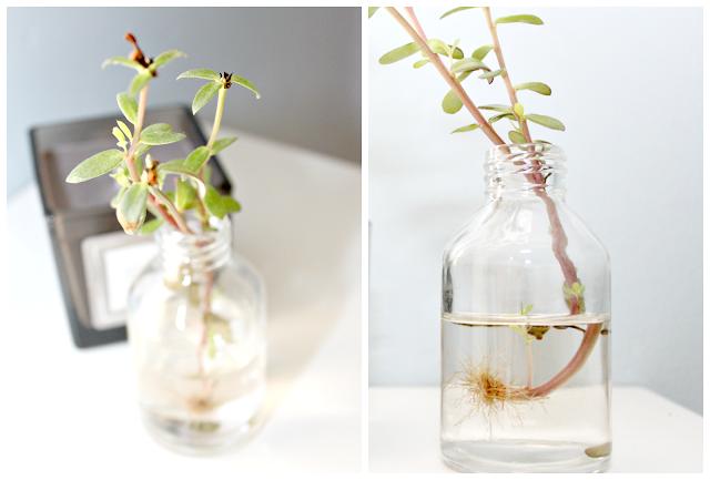 jak wychodować roślinę