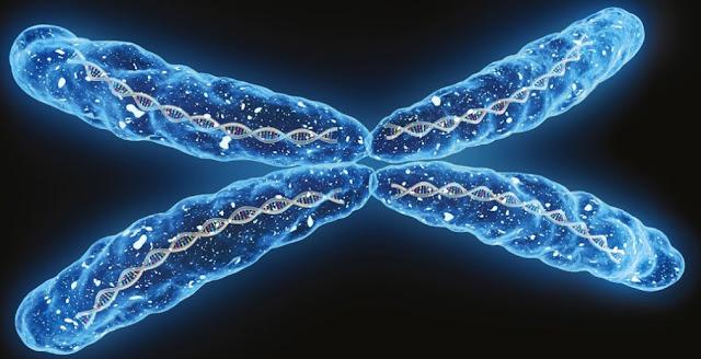 Teoria cromosomica de la herencia y biologia