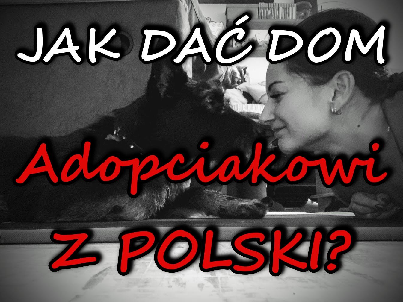 ADOPCIAK Z POLSKI ZA GRANICĄ - Adopcja psa z Polski i wywóz do UK - formalności.