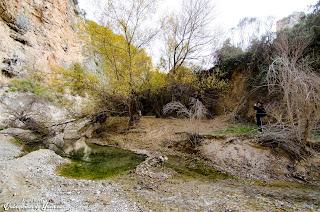 Entorno de las Colas del Pantano