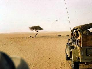 Η θλιβερή ιστορία του πιο μοναχικού δέντρου