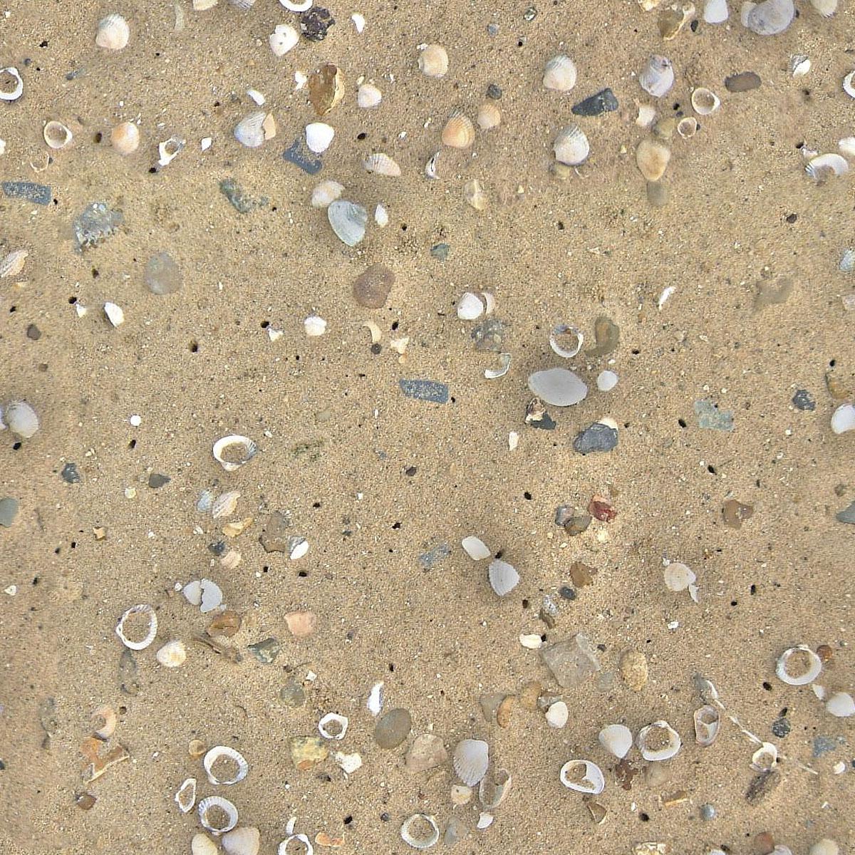 Seamless Beach Sand and Shells Texture + Bump Map ...