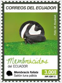 Membracis foliata (Saltón luna pálida)