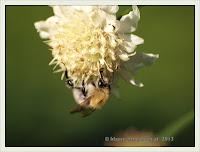 zerstören vögel wespennest