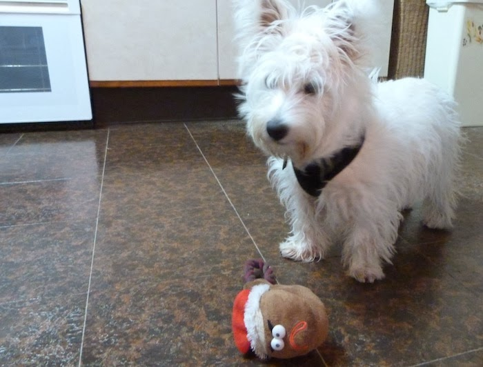 an image of westhighland terrier with christmas toy