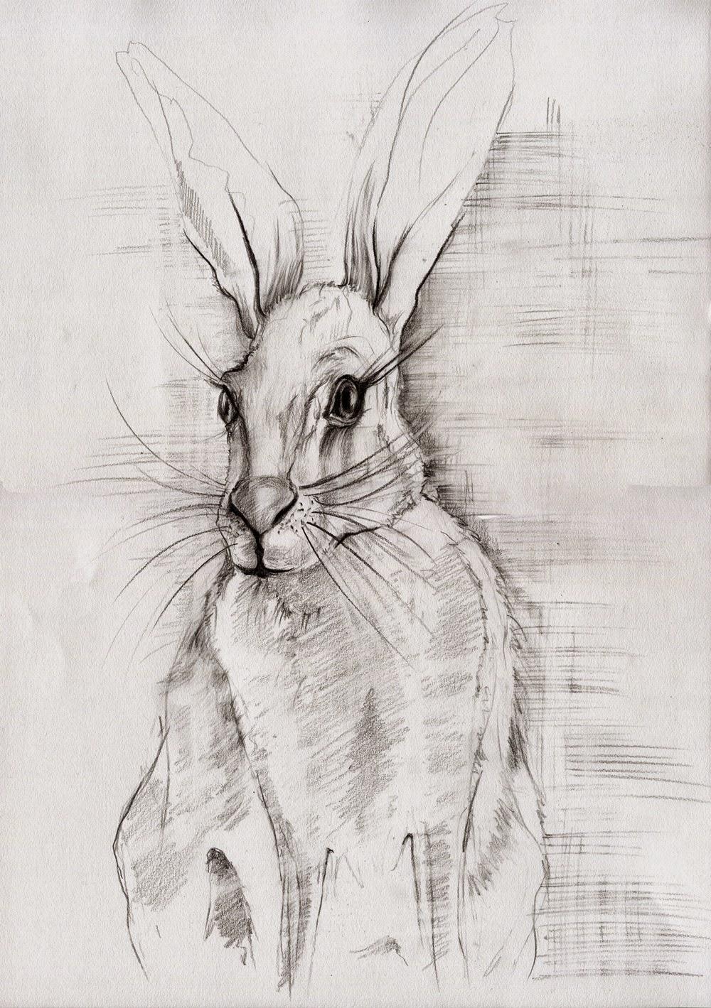 Jutta richter neue hasen - Hase zeichnen ...