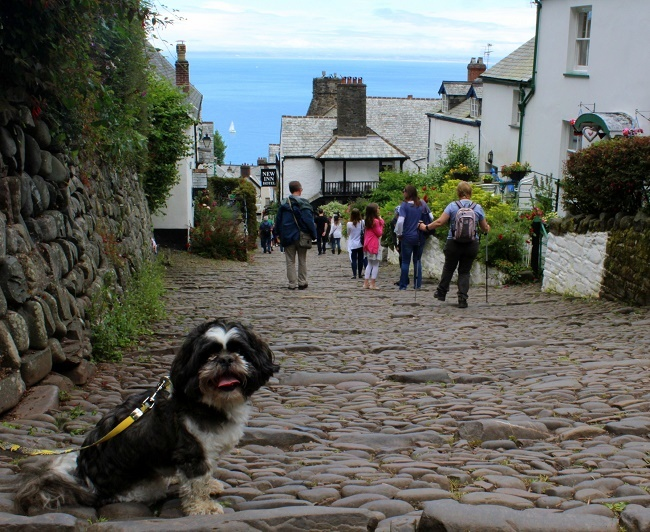 Dogs in clovelly