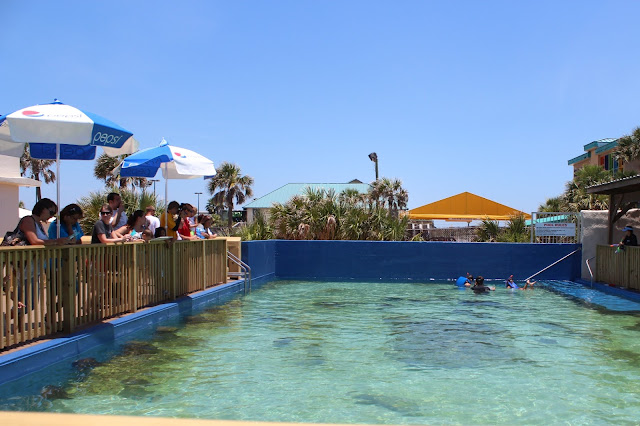 """Get inside! A visit to The Florida Aquarium is a great way to """"sea"""" life and hide from the weather! Or, you can easily spend most of the day at the Orlando Science Center which is filled with hands-on exhibits and features a domed theatre and planetarium."""