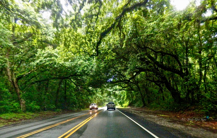 The road to Kiawah Island, South Carolina  | Ms. Toody Goo Shoes