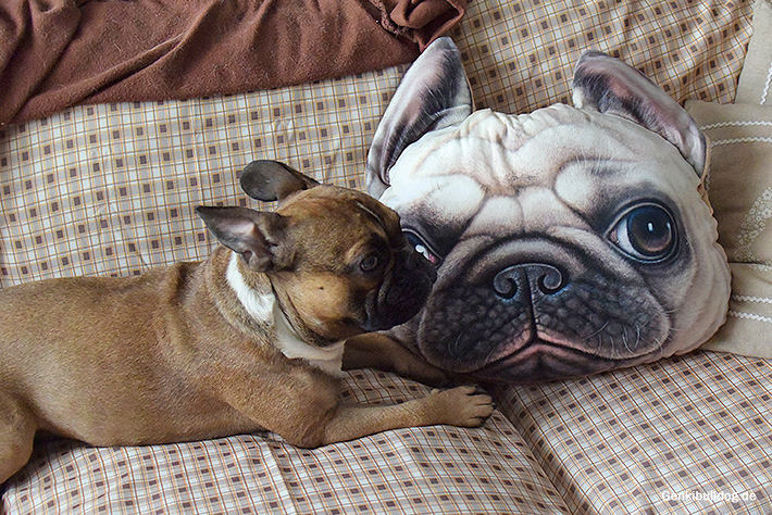 Bulldoggen Kissen