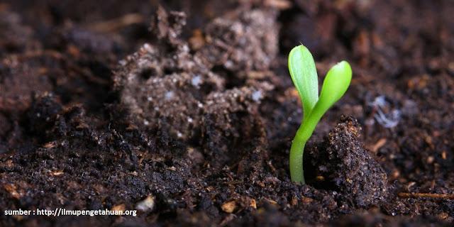 Tanah Humus : Manfaat Tanah Humus Dalam Sektor Pertanian
