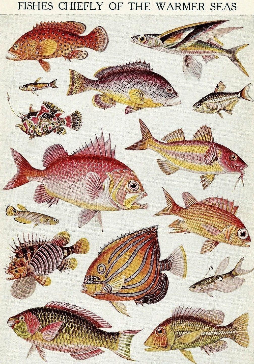 Peixes dos Mares Quentes