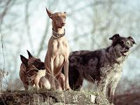 Tierheim Erfurt Tierporträt Hunde von Fotograf Michael Schalansky