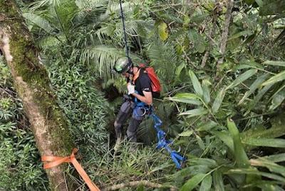 Vale do Ribeira recebe curso de escalada em grandes árvores